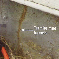Termites Mud Tunnels in Queens