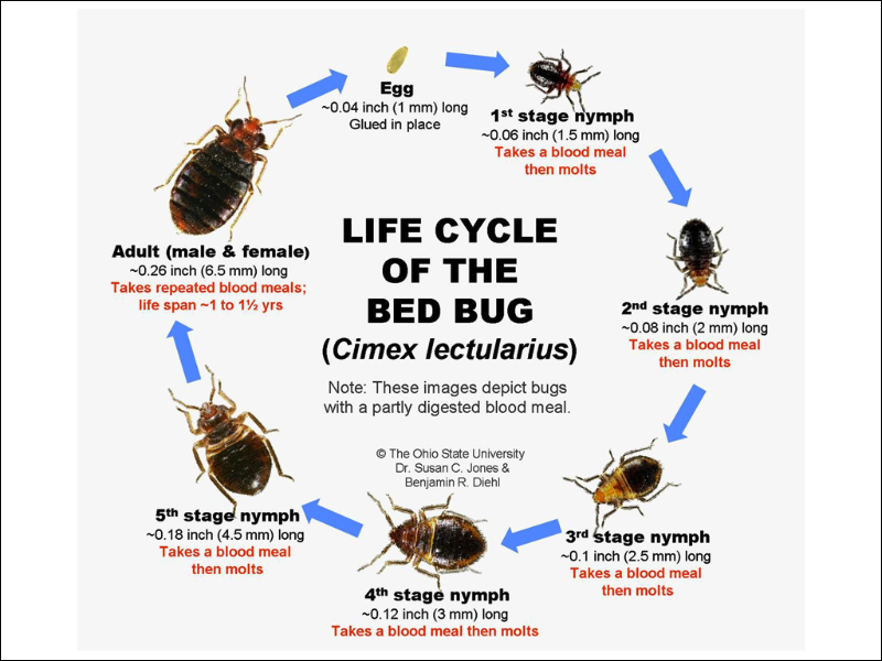 Best Bed Bug Exterminator New Jersey
